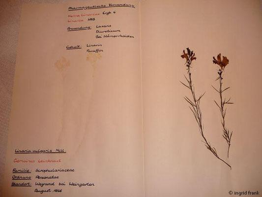 (107) Linaria vulgaris - Gemeines Leinkraut