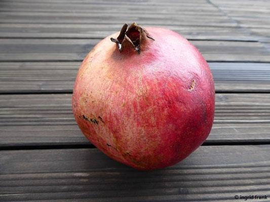 Punica granatum - Granatapfelbaum