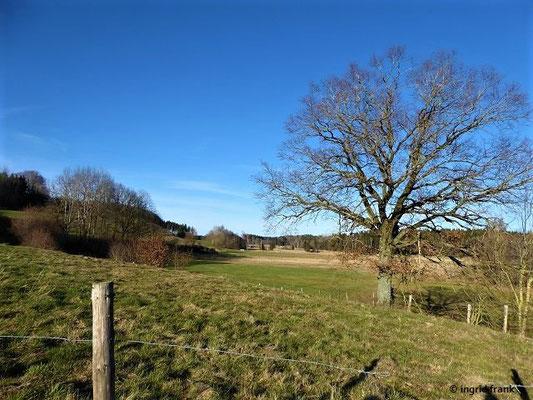 Quercus robur - Stieleiche (und Blick ins Lochmoos)