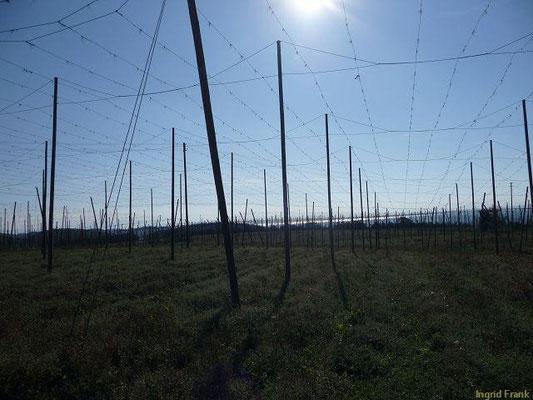 04.10.2009-Nach der Hopfenernte (Blick von Gornhofen zum Bodensee)