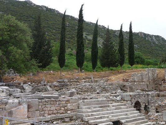 Cupressus sempervirens - Echte Zypresse (Ephesus)