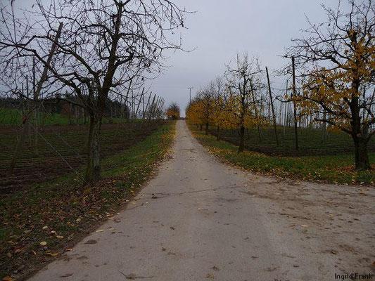 22.11.2009-Bei Gornhofen