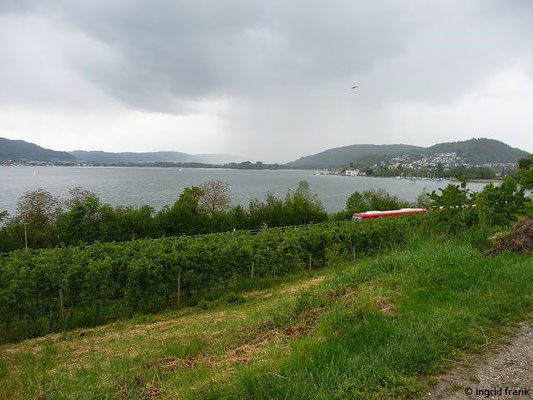 Blick zum Ende des Überlinger Sees bei Ludwigshafen/Bodman