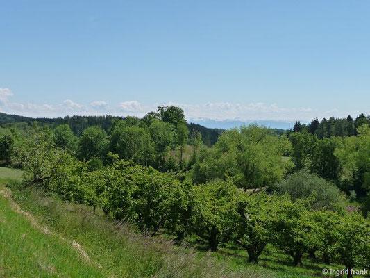 Blick Richtung Bodensee und Alpen