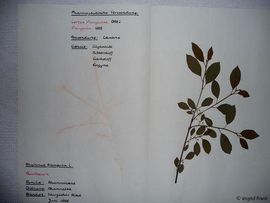 (59) Rhamnus frangula - Faulbaum