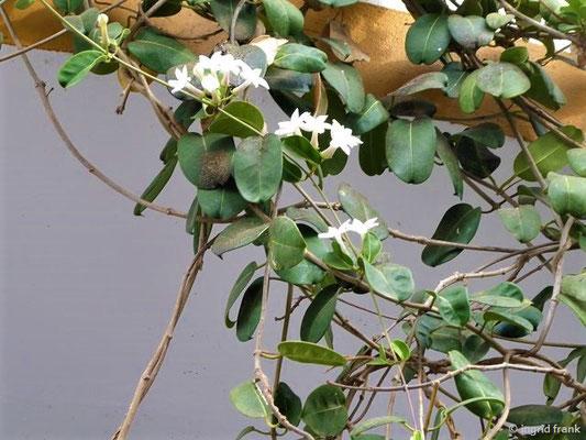 Wer kennt diese Pflanze?