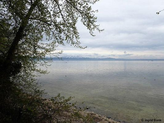 Blick über den Bodensee zum Schweizer Ufer