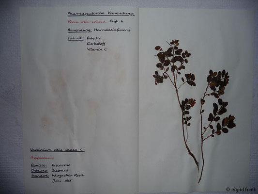 (78) Vaccinium vitis-idaea - Preißelbeere