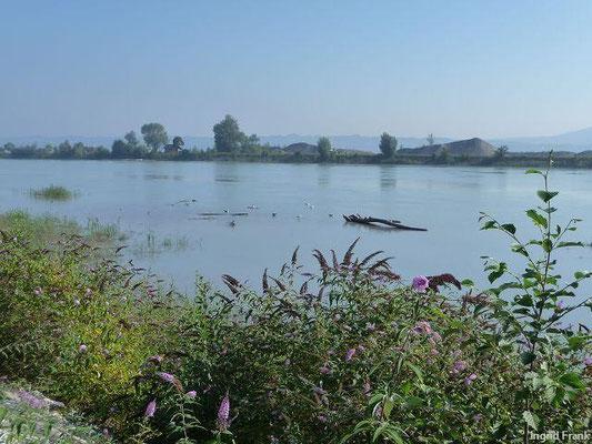 Auf dem Rheindamm Richtung Bodensee