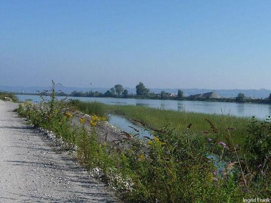 Auf dem Rheindamm