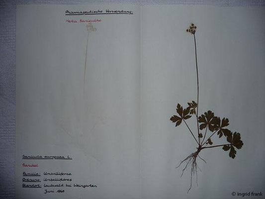 In meinem alten Herbarium kann man die ganze Pflanze gut erkennen.