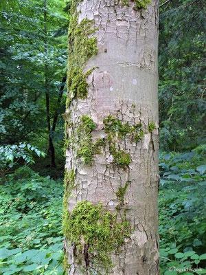 13.07.2019 - NABU-Exkursion im Stadtwald Weingarten