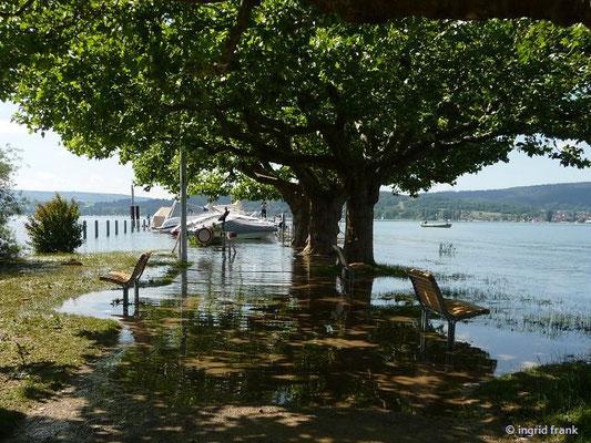 Bodenseehochwasser in Radolfzell