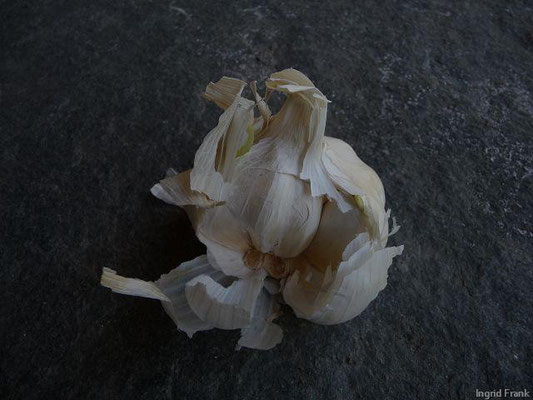 20.10.2012-Allium sativum - Knoblauch