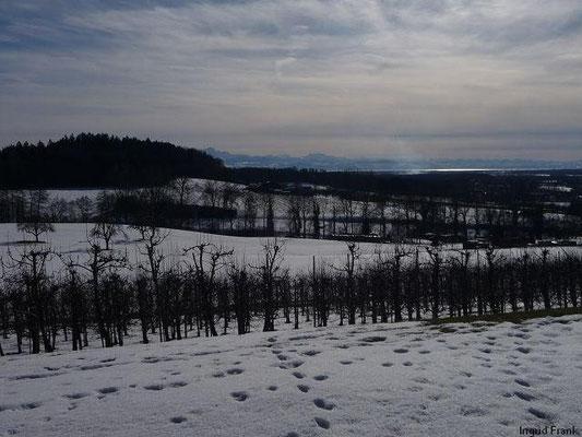 21.02.2010-Am Funkensonntag in Oberhofen, Blick zum Bodensee