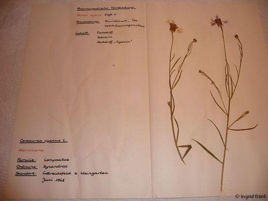 (132) Centaurea cyanus - Kornbume