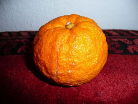 Citrus aurantium ssp. aurantium - Pomeranze