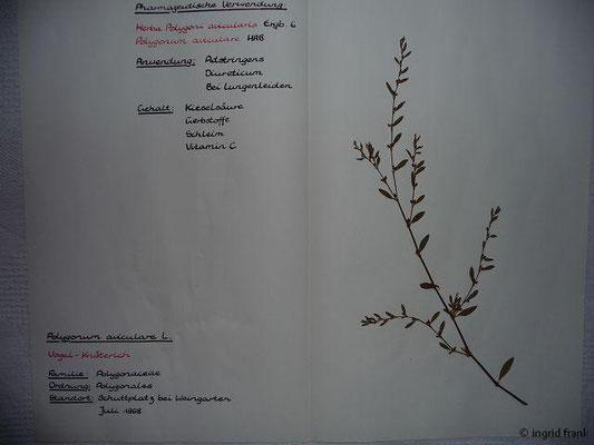 (71) Polygonum avicuare - Vogel-Knöterich