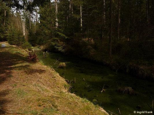 Im Naturschutzgebiet Wettenberger Ried