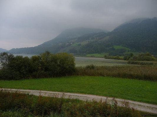 Westliches Ufer des Großen Alpsees