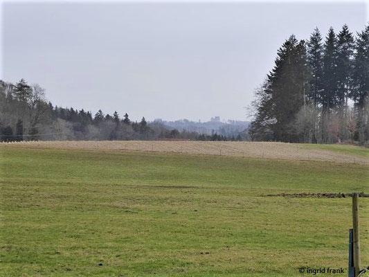 Blick zur Waldburg