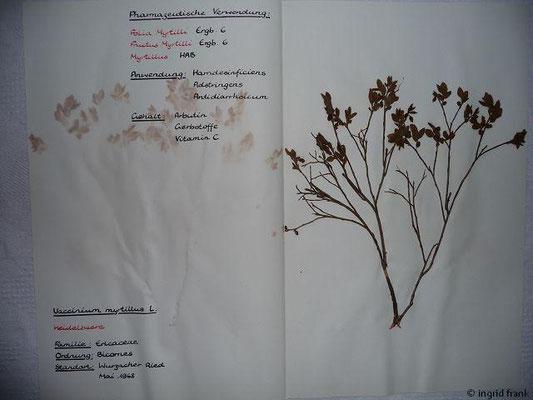 (79) Vaccinium myrtillus - Heidelbeere