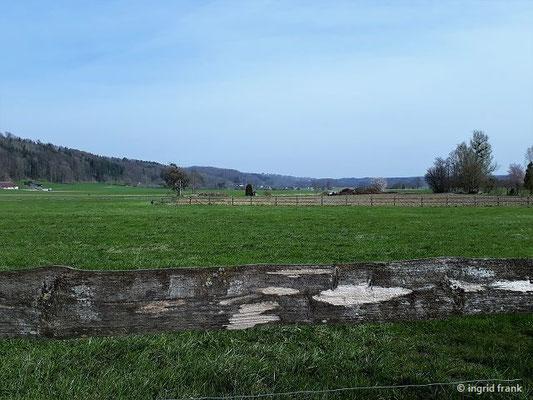 Blick ins nördliche Schussenbecken Richtung Wolpertswende