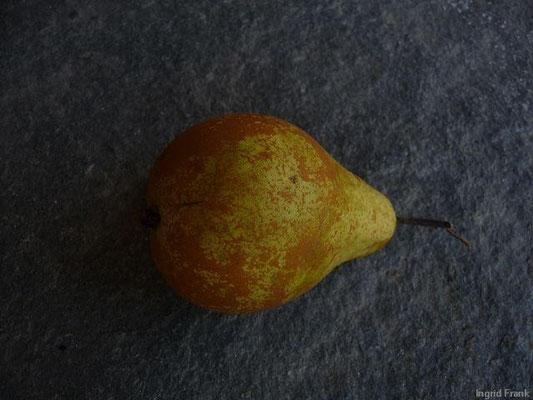 Pyrus communis - Birne