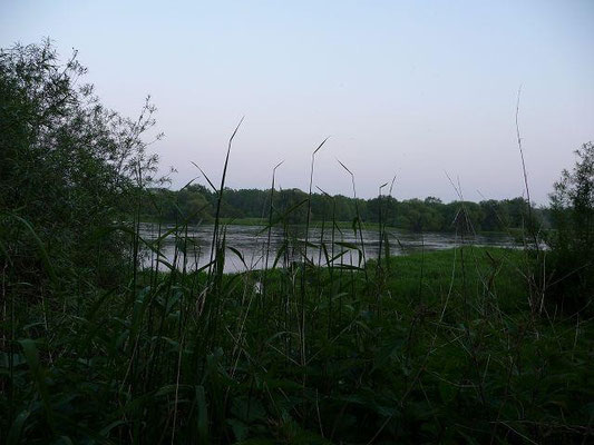 28.05.2010-Die Elbe bei Brambach