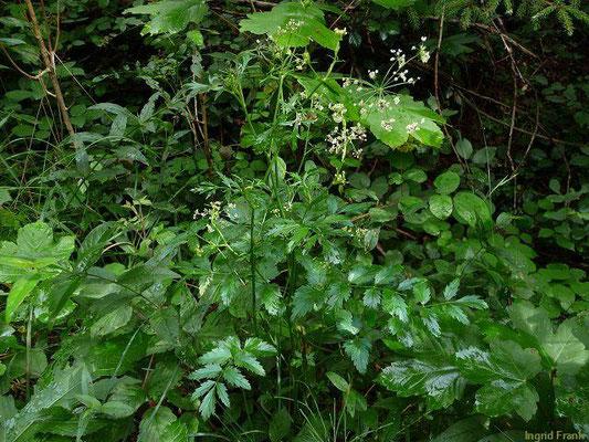 23.07.2011 - Wald bei Hirschlatt