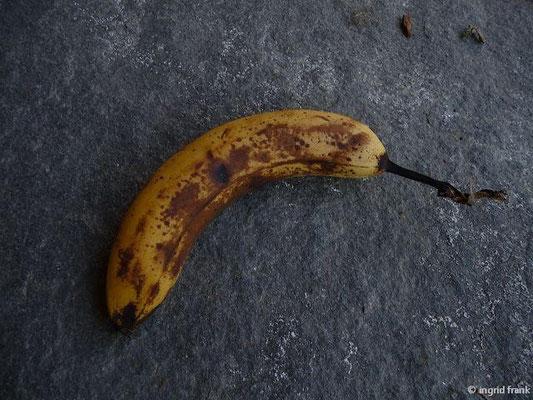 Musa x paradisiaca - Banane