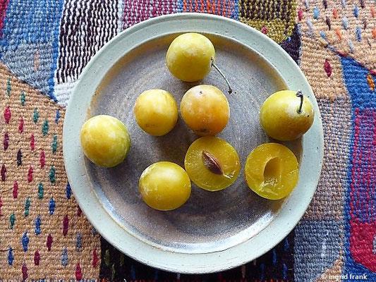 Prunus domestica ssp. syriaca - Mirabelle