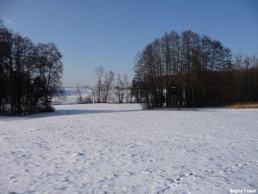 03.02.2012-Beim Metelisweiher