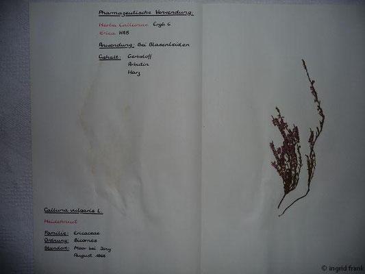 (82) Calluna vulgaris - Heidekraut