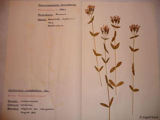 (89) Centaureum umbellatum - Echtes Tausendgüldenkraut.