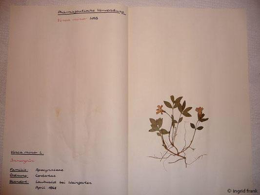 (90) Vinca minor - Immergrün