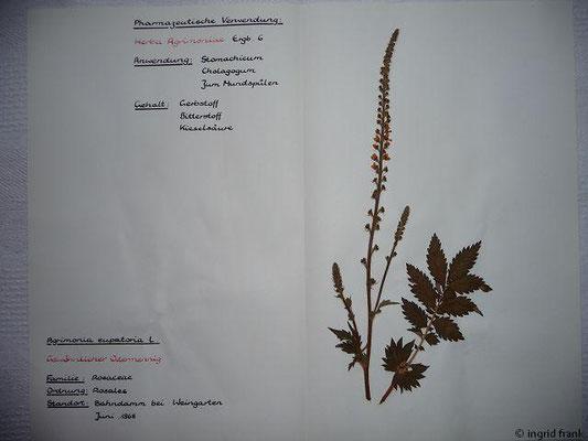 (28) Agrimonia eupatoria - Gewöhnlicher Odermennig