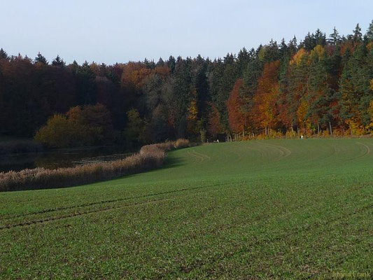 01.11.2010-Der Lanzenreuter Weiher zwischen Weingarten und Ravensburg