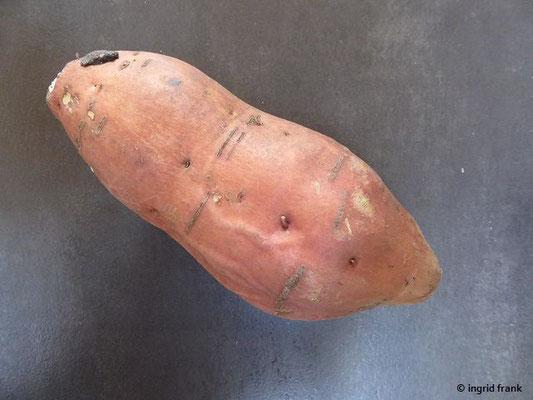 Ipomoea batatas - Süßkartoffel