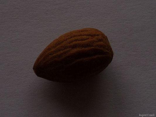 Prunus dulcis var. dulcis - Mandel