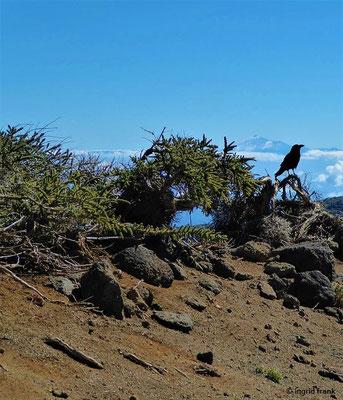 Im Hintergrund der Pico del Teide auf Teneriffa