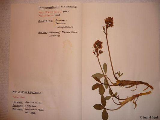 (88) Menyanthes trifoliata