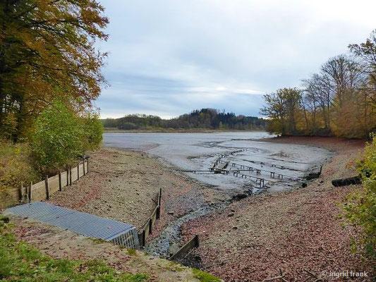 """Der Rösslerweiher wird gerade """"gewintert"""", d.h. er wird abgefischt und sein Wasser über einen längeren Zeitraum abgelassen. Ziel ist der Abbau des Schlamms am Weihergrund und somit eine Verbesserung der Wasserqualität."""