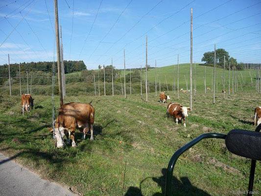 04.10.2009-Nach der Hopfenernte (bei Gornhofen)