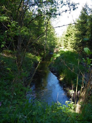 Ausfluss des Stillen Bachs aus dem Lochmoos