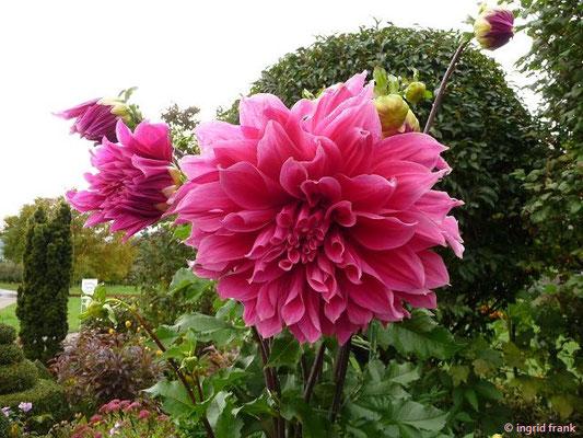 Garten in Rammetshofen