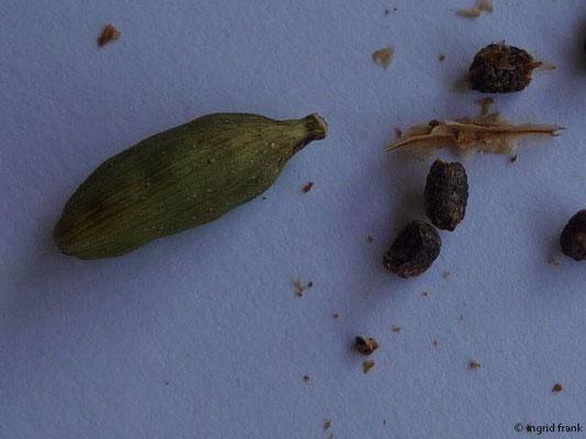 Elettaria cardamomum - Kardamom