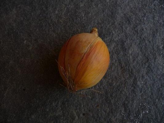 20.10.2012-Allium cepa - Küchen-Zwiebel