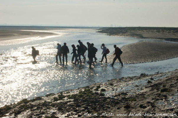 traversée baie de somme+le Crotoy+st Valery sur somme+guide nature baie de somme+balade+promenade+randonnée