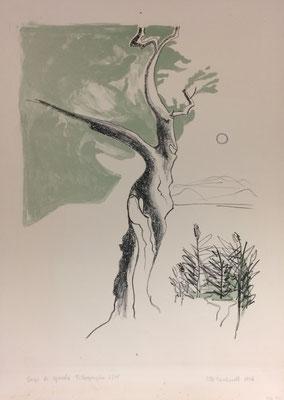 Lago di Garda, Otto Eberhardt, 1965, Lithografie, Papier, 31x41, ID1244